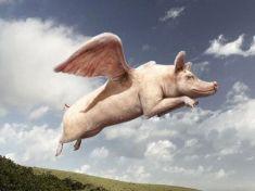 Flying pig from www.docteurduchmoll.com