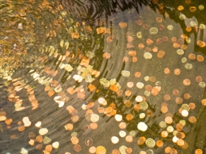 coins shine in a wishing well